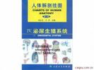 人體解剖學彩色圖譜、泌尿生殖系統掛圖