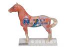馬體針灸穴位模型