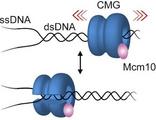 單分子動態分析研究領域的最新突破與進展