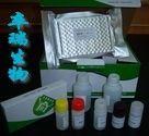 牛血小板活化因子(PAF)Elisa试剂盒