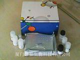 人乳酸脱氢酶(LDH)ELISA试剂盒