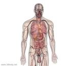 虚拟解剖实训室解决方案