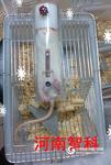 筒型白鼠固定器