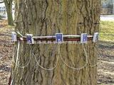 PiCUS应力波树木断层画面成像仪