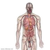 虛擬解剖實訓室解決方案
