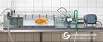 Loligo水生生物呼吸代谢系统