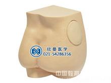 臀部肌內注射模型