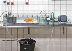 鱼类游泳行为测定系统 鱼类游泳能力测试