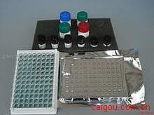 人精氨酸酶(Arg)ELISA试剂盒