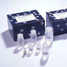 小鼠阿立新A(OrexinA)ELISA试剂盒