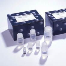 兔子皮质醇(Cortisol)ELISA试剂盒