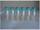 进口标准品CAS号:30246-33-4标准品头孢唑啉杂质A