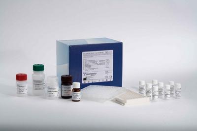 血管活性肠肽  VIP