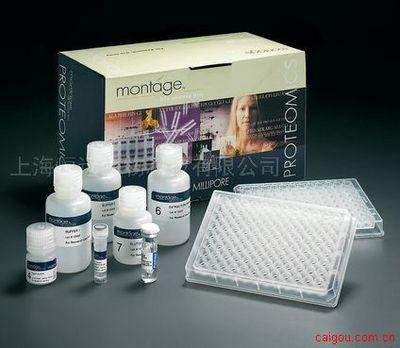 人酪氨酸激酶2 ELISA试剂盒