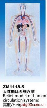 人体循环系统浮雕