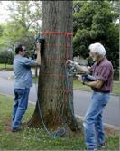 TRUTM树木雷达检测仪