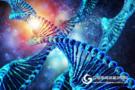 广州生物院发现DNA被动去甲基化的新作用