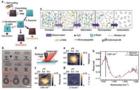 丝纤蛋白电调控构象转变及光刻应用的纳米红外研究