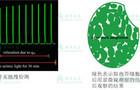 qM—叶绿体迁移—改变游戏规则的研究