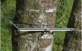 DD-L 大型直半徑生長測量儀