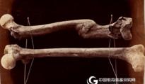 ASD网络研讨会:使用近红外光谱估算人类骨骼残骸的死亡时间