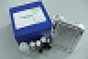 酪氨酸激酶2ELISA试剂盒厂家代测,进口人(Tyk-2)ELISA Kit说明书