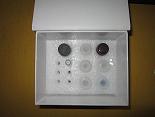 代测大鼠角化细胞内分泌因子/双调蛋白,大鼠(KAF)/双调蛋白