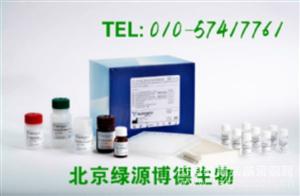 人ras同源物基因家族成员b Elisa kit价格,RHOB进口试剂盒说明书