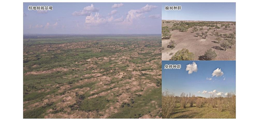利用无人机划分榆树疏林草原植被类型